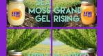 Leve Sea Moss