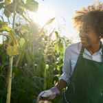 $10,000 Grants for Creation and Expansion of Agricultural Events