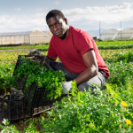 $50,000 Conservation Innovation Grants for Farmers and Conservationists