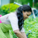 Grants for Minority Farmers to Boost Agricultural Businesses